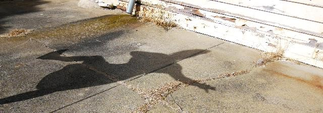 Shadow vid still crop