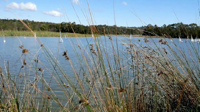 Sailing reeds